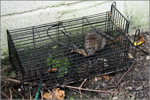 Everything You Need to Know About Possum Traps